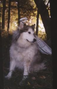 Lindas_dog_web